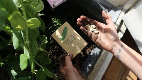 la box a planter courgettes
